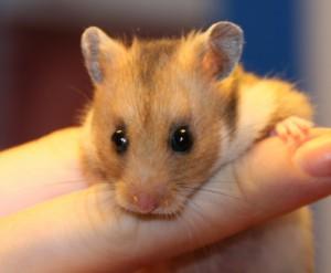 artgerechte Hamsterhaltung