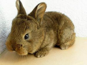 artgerechte Kaninchenhaltung - Wohnungshaltung