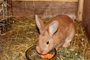 Kaninchenhaltung