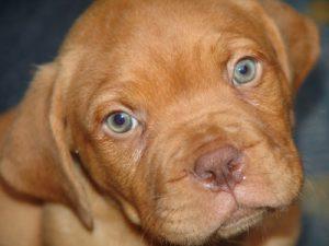 Welpen übers Internet: ein Hund gratis zur Leine