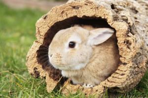 Kaninchenrassen Teil 2: Farbenzwerge