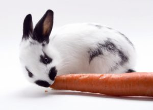 Verdauung bei Kaninchen