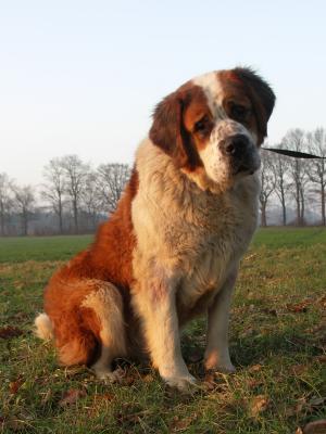 Halt Dog Rescue