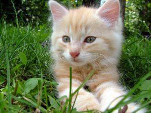 Internationaler Tag der Katze - 20 Fakten über Stubentiger