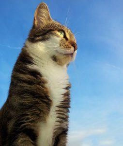 Mythen in der Haustierhaltung - Katzen