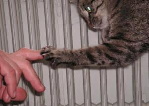 Tierhaltung im Altenheim