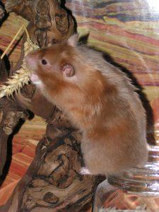 Hamsterbeschäftigung