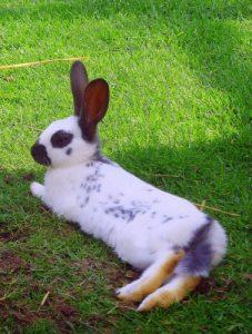 Kaninchen im Sommer