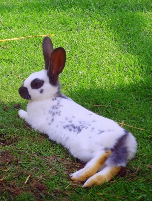 unsere tiere im sommer sch tzen teil 2 kaninchen. Black Bedroom Furniture Sets. Home Design Ideas
