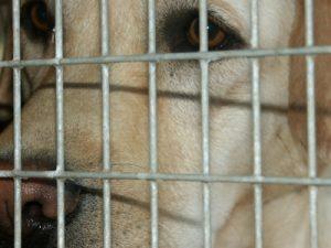 traurige Hunde in Rumänien