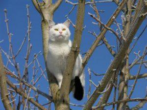 Katzen versichern