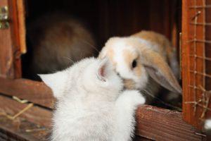Kaninchen Vergesellschaftung