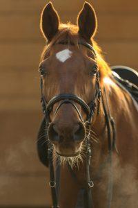 Pferdefutterergänzungsmittel