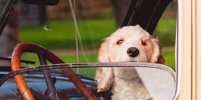 Autoreise mit Hund