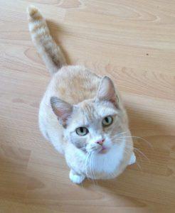 Katze Schnurri