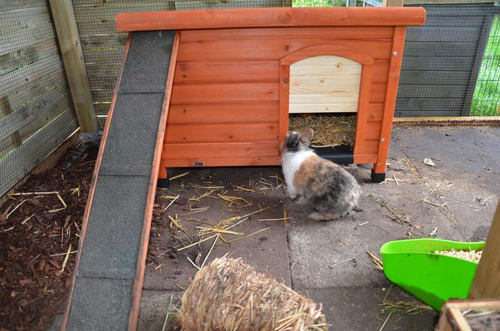 Kaninchen Schutzhütte 2