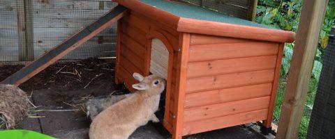 Kaninchen Schutzhütte 1