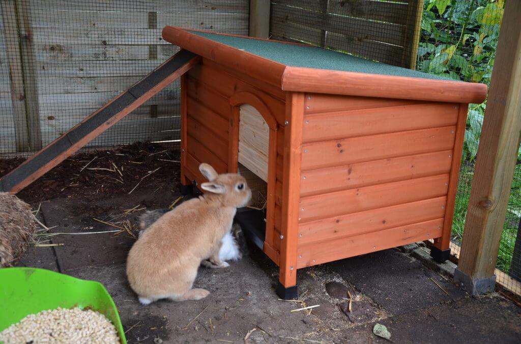 Kaninchen Schutzhütte 9