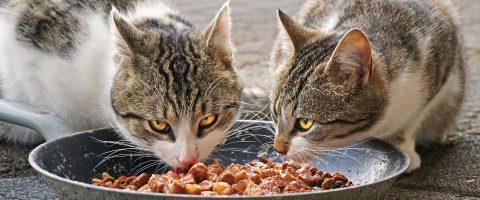 gutes Katzenfutter