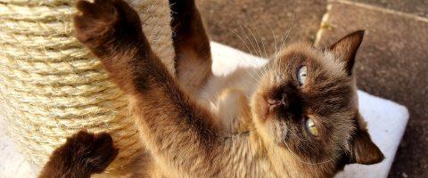 Markierverhalten von Katzen